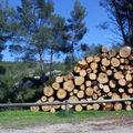 coupe de bois 24 03 2009