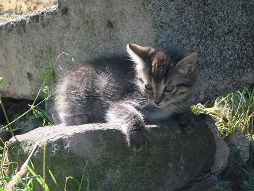 2008 06 30 Un chaton sur une pierre