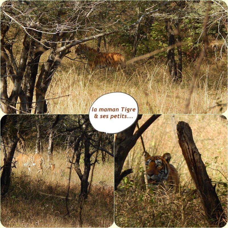 Ranthambore_mosa_que_tigre