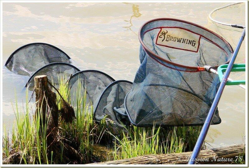 Pêche à l'Etang de la Tour (18)