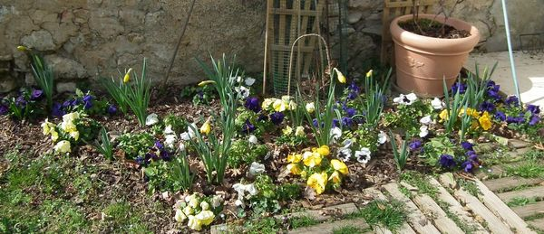 fleurs 11 mars 2013