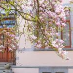 aaa fleurs nouvelles-001