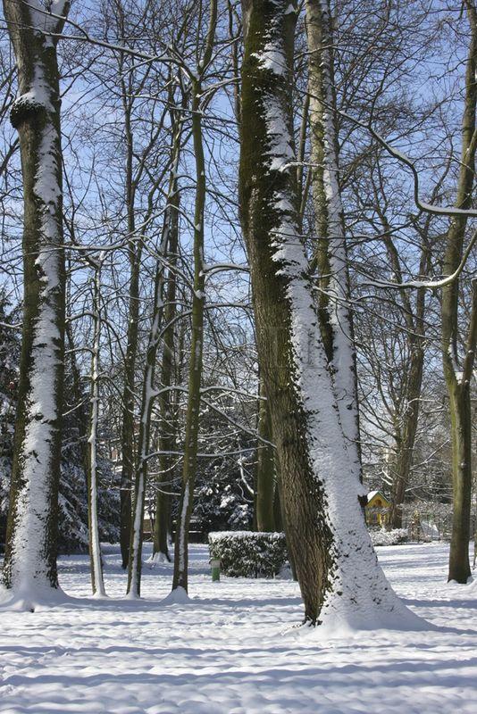 neige bel abord 12 mars 2013 (42)