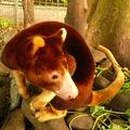 Kangourou des arbres