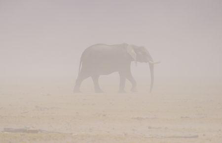 Kenya__1450_
