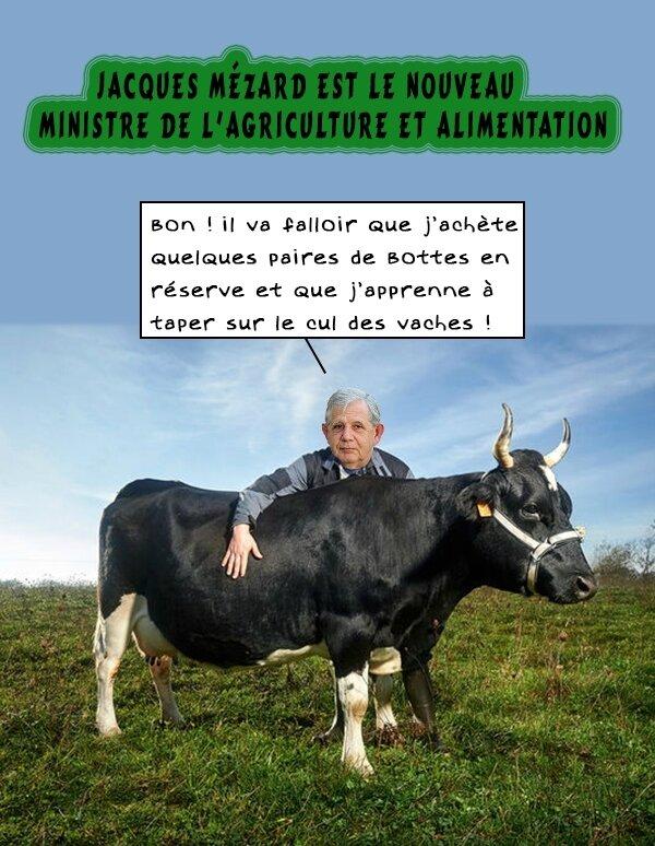 mezard-vache-agriculture