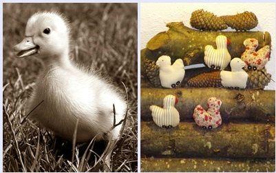 Petits canards (14)