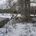 2009 01 21 Le chemin et les branches d'arbres cassés