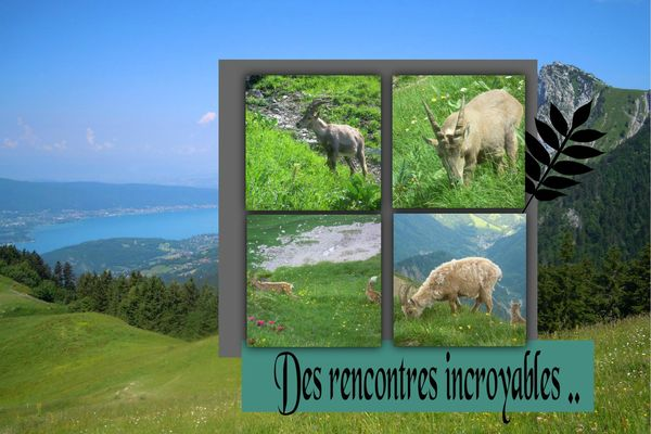 REncontres incroyables