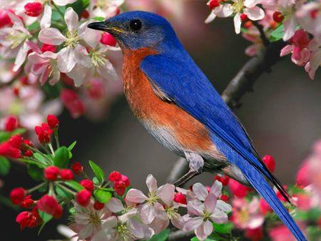 oiseau_01