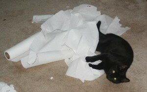 Max_with_paper_towel