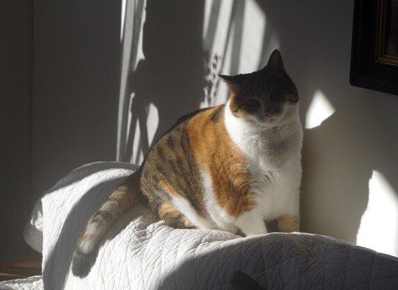 Gavotte au soleil