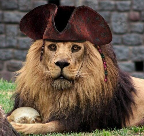lion_pirate