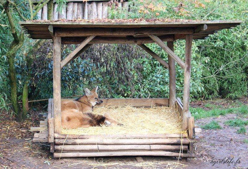 Amneville zoo 16