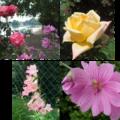 fleurs tete