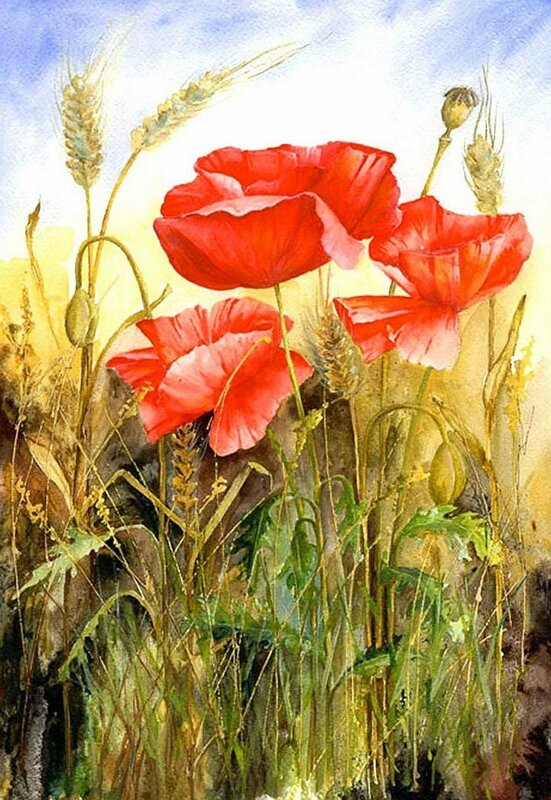 be6f5d0badfd6376db242408a0f6649a--poppies-art-watercolor-flowers