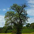 La nature... les arbres... les champs de colza... l'espace...