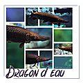 Dragon d'eau aquarium de lyon