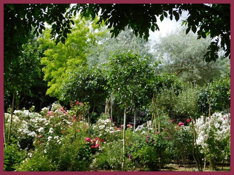 Jardin des Duo 03-0621