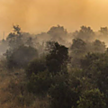 Incendies dans le sud de la france : au cœur de la crise, l'etat décide de rogner encore sur les moyens