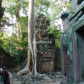 site d'angkor_ta prohm_17