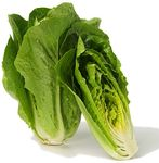 laitue_romaine