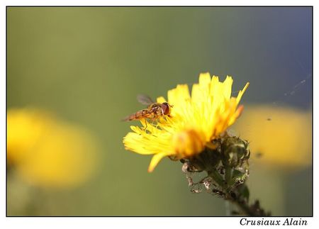 cnb_harchies_2012_07_07__11