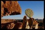cactushueco
