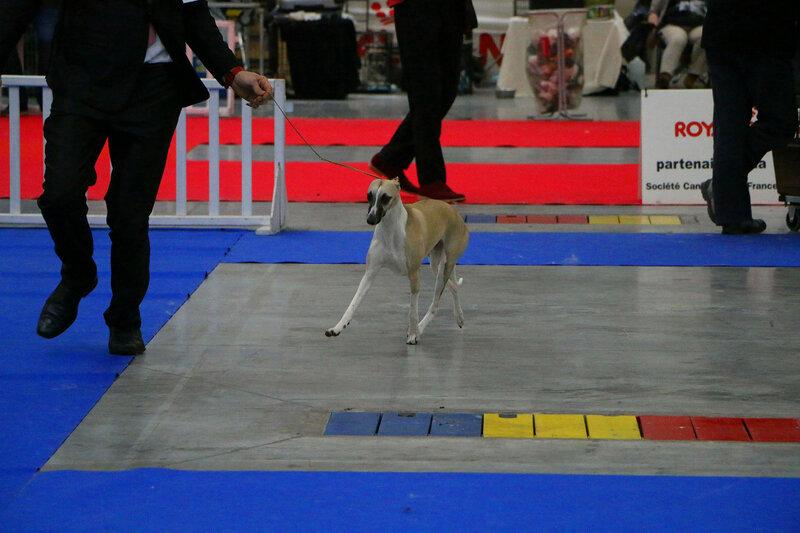 paris dog show 2017 193