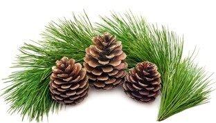 103456__cones-tree-tree-fir-branch-foliage-green-white_p_thumb[2]