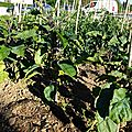 902 - fête des jardins 2012