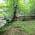 Ravissants plateaux de hêtres et de mousse en surplomb du Lourdi