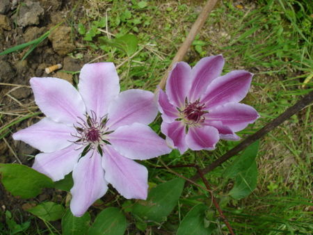 fleurs_003