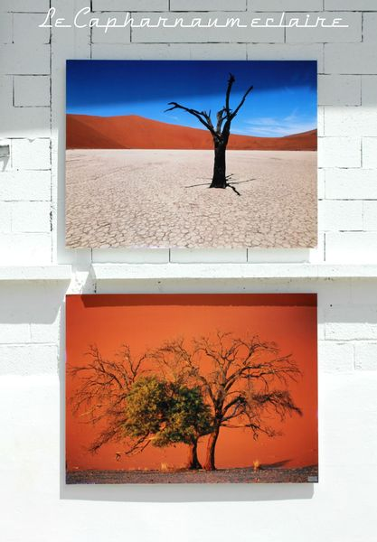 La Gacilly arbres désert