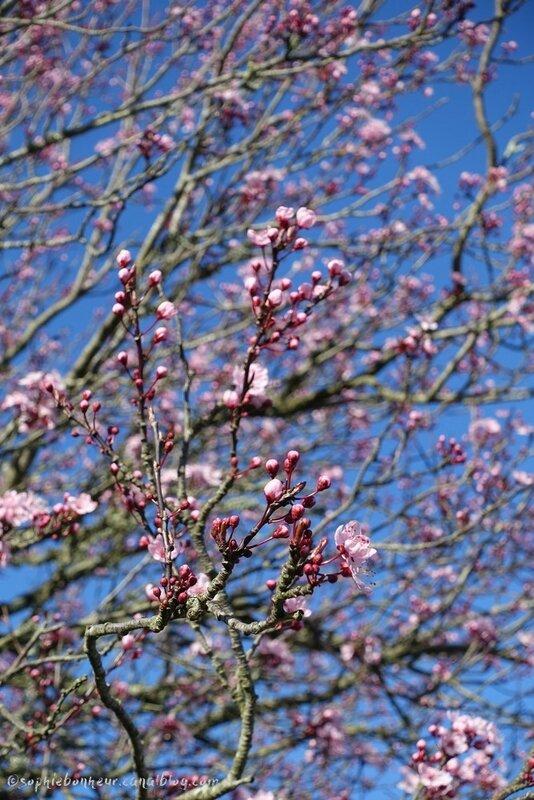 f2 prunellier