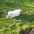 Handy bienvenue à la maison vendredi 30 mars 2012 026