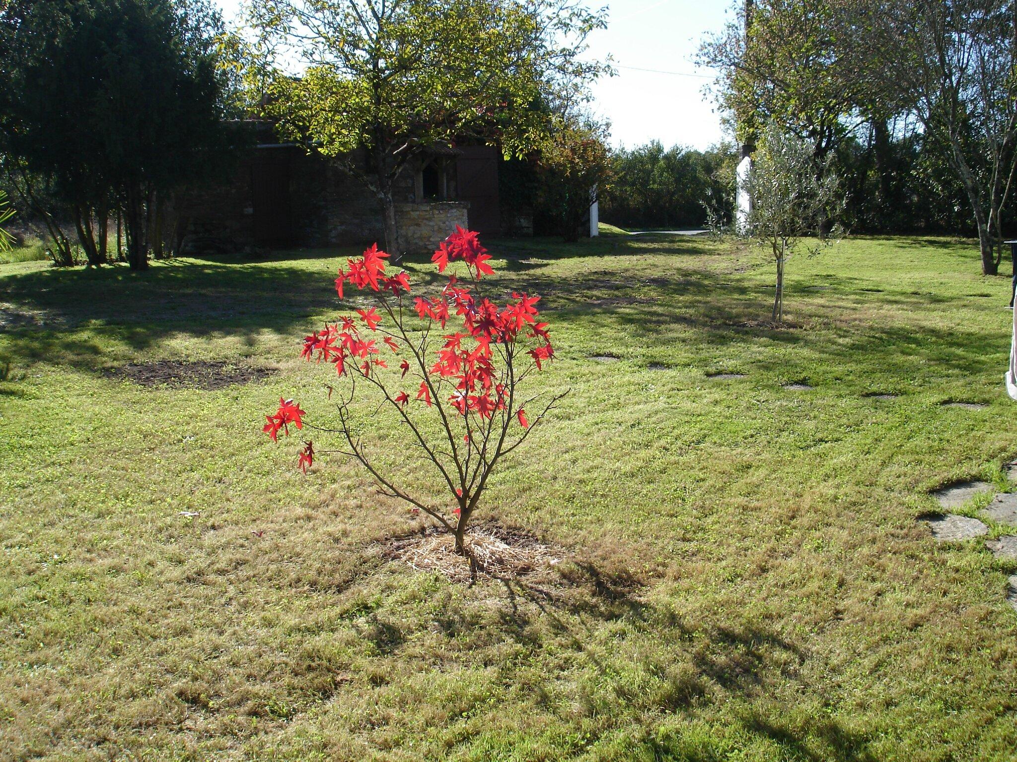 Jardin Octobre 2014 (9)