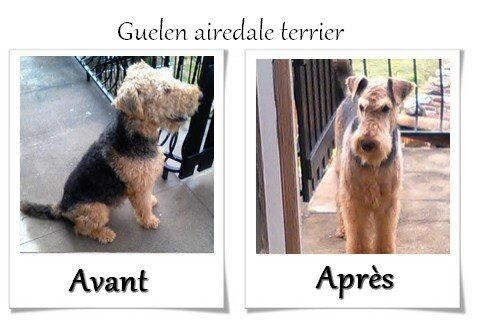 DOG CHRIS AVANT APRES04