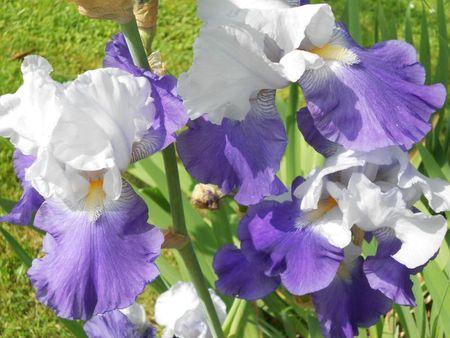 jardin et déco Lyne mai 2012 027