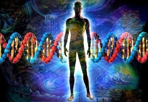 adn-humano