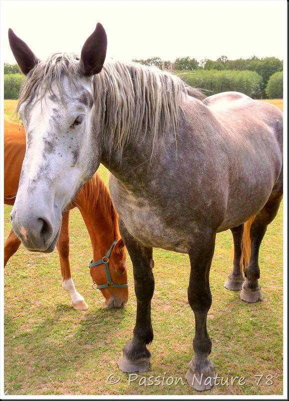 Les chevaux en pension (13)