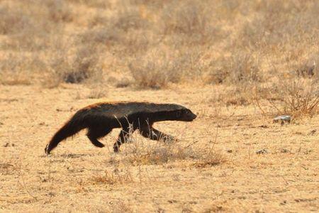Namibie (229)