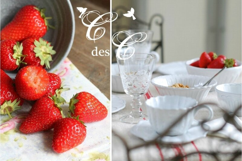 dégust fraises