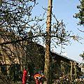 IMG_3861 Mathieu abattant l'épicéa