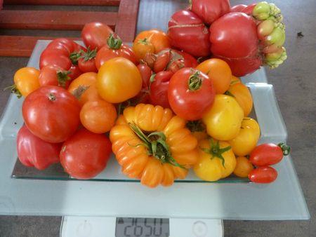 26-tomates du jour (2)