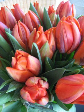 Tulipes oranges