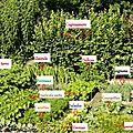 Présentation de mon jardin