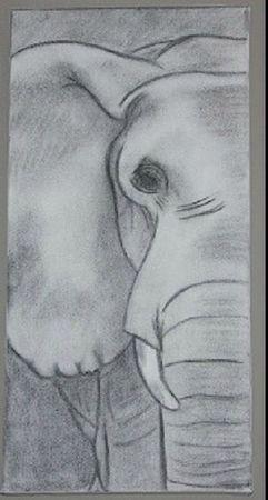 dessin-elephant-au-fusain-by-erika-1417648-img-1685-6d96f_big