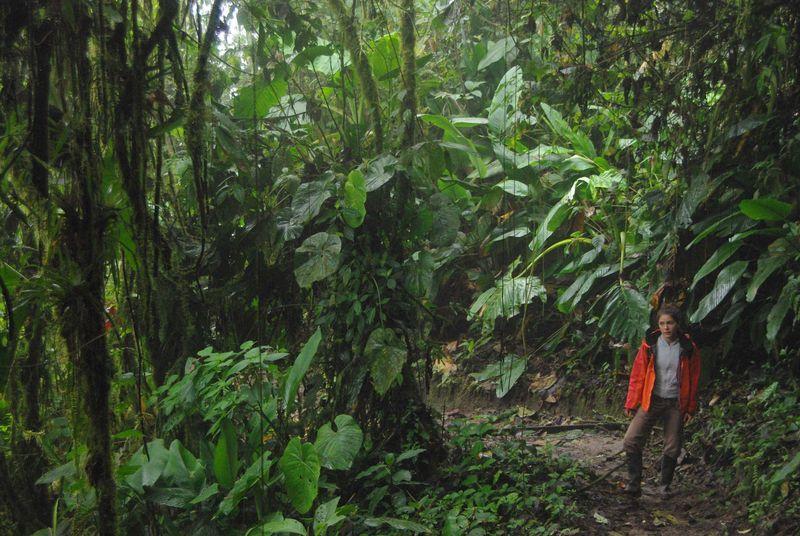 Chemin d'accès au lodge, à travers la forêt nuageuse
