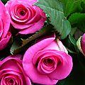 Tout d'abord, je vous souhaite un excellent dimanche avec ces quelques fleurs...